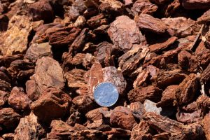 Medium decorative bark with 25 cent quarter for relative size comparison (close-up shot).