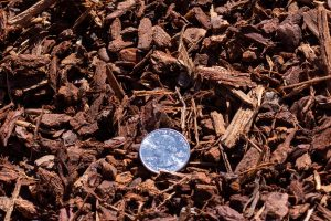 Mini Decorative bark displayed with 25 cent quarter for relative size comparison.