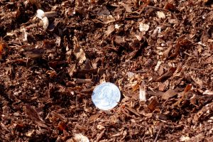 Nitrolized Redwood Soil Amendment (Close-up photograph). Picture with 25 cent for size comparison.