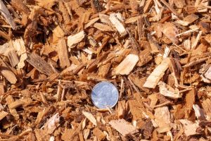 ASTM/ADA Playground Chips with 25 cent quarter for size comparison.