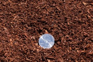 "0-1/4"" Red Fir Humus (close-up shot) with 25 cent quarter for relative size comparison."