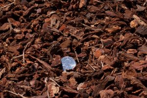 Small decorative bark with 25 cent quarter for relative size comparison (close-up shot).