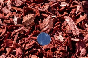 Sunset Red Colored Chips with 25 cent quarter for relative size comparison (Close-up photograph).