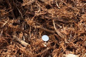 Shredded Cedar Bark with 25 cent quarter