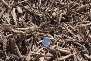 Orchard Mulch with 25 cent quarter for relative size comparison.